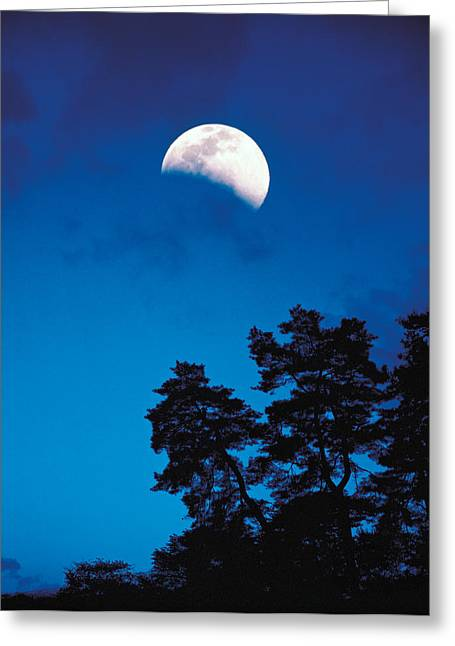 Half-moon Over Trees In Dark Greeting Card by Panoramic Images