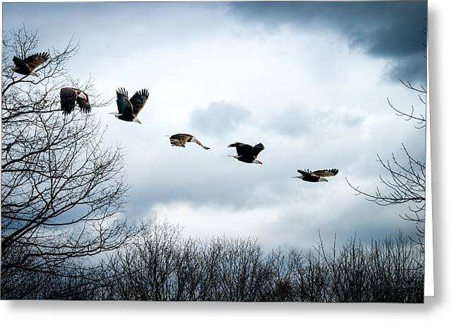 Exposure Greeting Cards - Half second of flight Greeting Card by Bob Orsillo