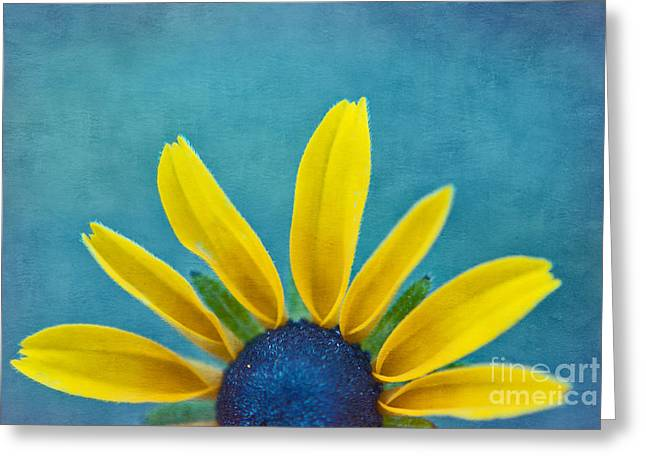 Texture Floral Photographs Greeting Cards - Half Sun - s03dt01a Greeting Card by Variance Collections