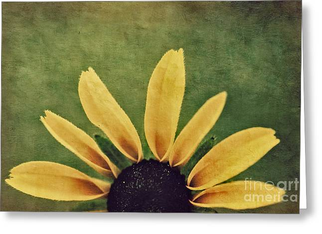 Texture Floral Photographs Greeting Cards - Half Sun - s05c22t3 Greeting Card by Variance Collections