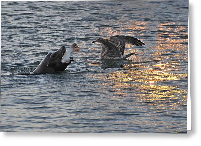 California Sea Lions Greeting Cards - Halibut Dinner For A Sea Lion Greeting Card by Scott Lenhart