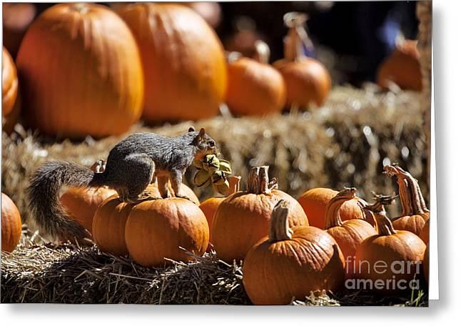 Dallas Arboretum Greeting Cards - Halloween Feast Greeting Card by Douglas Barnard