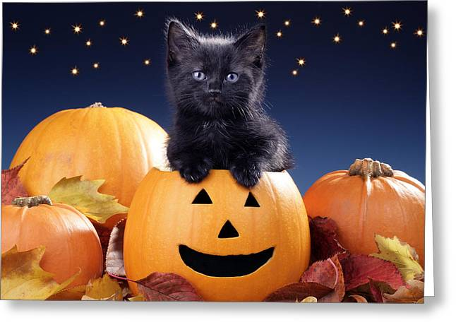 Kitten Greeting Cards - Halloween Kitten Greeting Card by Greg Cuddiford