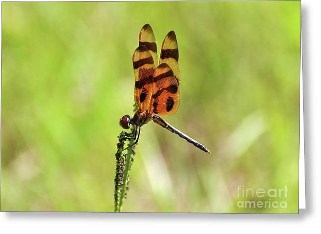 Dragon Fly Photo Greeting Cards - Halloween Pennant Greeting Card by Al Powell Photography USA