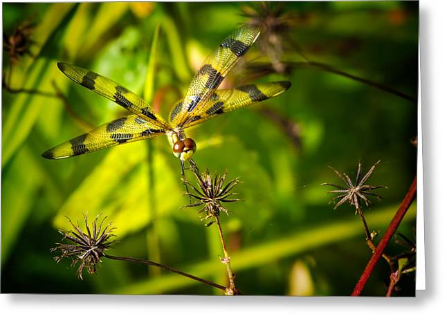 Halloween Pennant Dragonfly Greeting Card by Mark Andrew Thomas