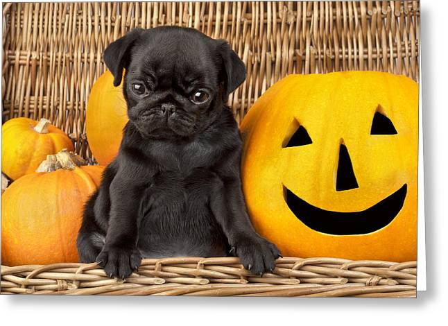 Puppies Photographs Greeting Cards - Halloween Pug Greeting Card by Greg Cuddiford