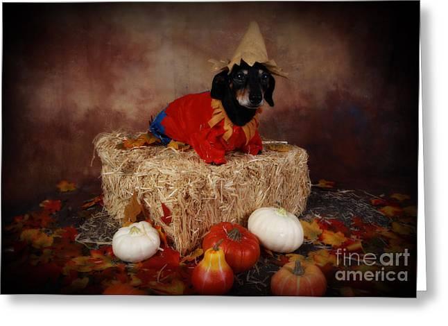 Dachshund Puppy Digital Art Greeting Cards - Halloweenie Greeting Card by Denise Oldridge