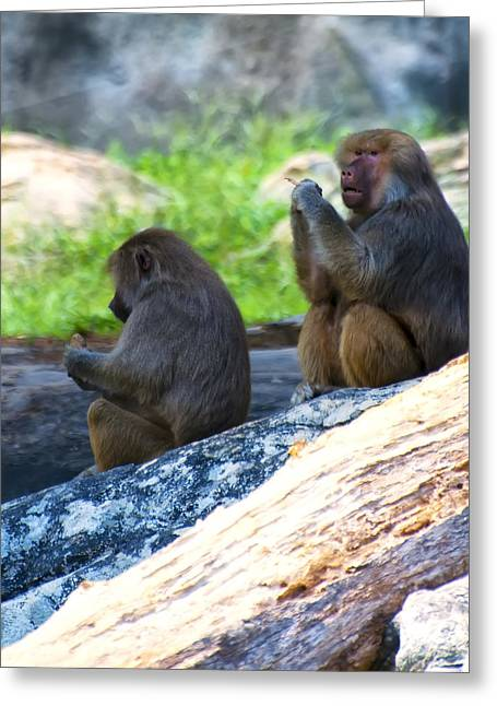 Print On Canvas Greeting Cards - Hamadryas Baboon Sitting On Rocks Greeting Card by Chris Flees