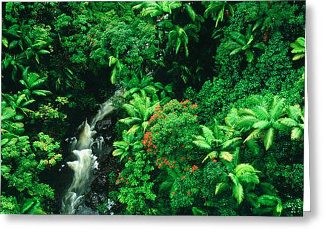 Tropical Vegetation Greeting Cards - Hamakua Coast, Hawaii, Hawaii, Usa Greeting Card by Panoramic Images