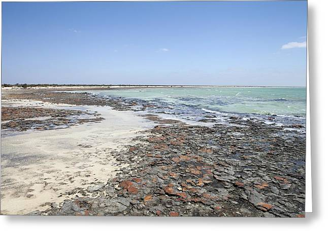 Microbial Greeting Cards - Hamelin Pool Marine Nature Reserve Greeting Card by Science Photo Library