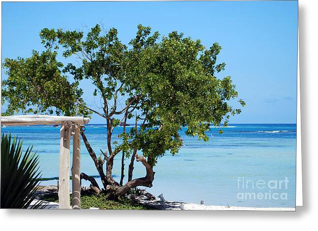 Playa Blanca Greeting Cards - Hammock Stand on Playa Blanca Punta Cana Dominican Republic Greeting Card by Heather Kirk