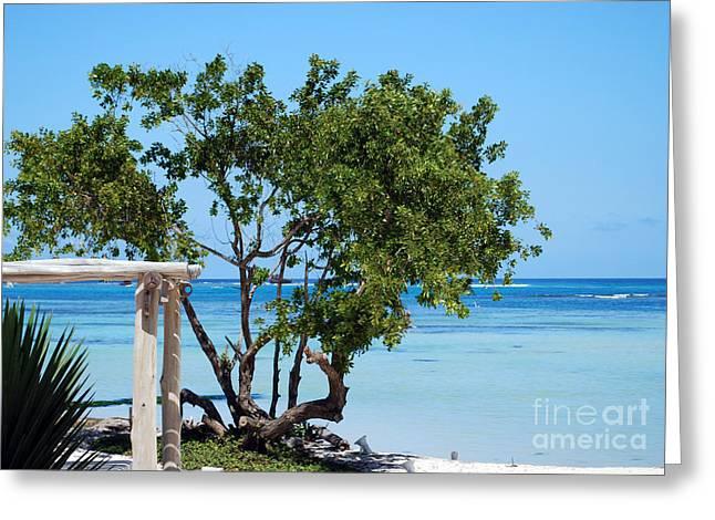 Playa Blanca Greeting Cards - Hammock Stand on Playa Blanca Punta Cana Dominican Republic Greeting Card by Heather Kirk