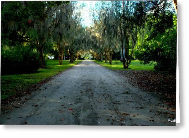Charleston Pathway Greeting Cards - Hampton Park Greeting Card by Lisa Moatts