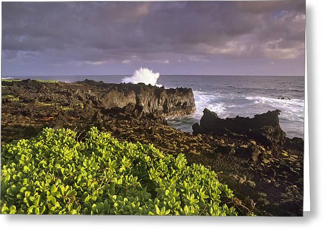 Ocean Shore Greeting Cards - Hana Coast At Maui Hawaii Greeting Card by Tim Fitzharris