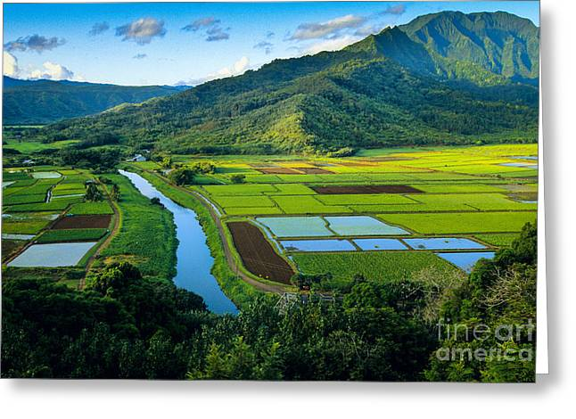 Rural Scenery Greeting Cards - Hanalei Valley Greeting Card by Inge Johnsson