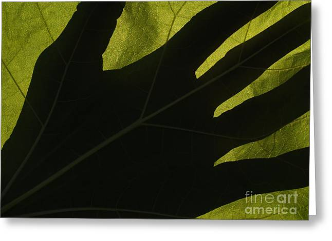 Kelly Greeting Cards - Hand and Catalpa Veins Backlit Greeting Card by Anna Lisa Yoder