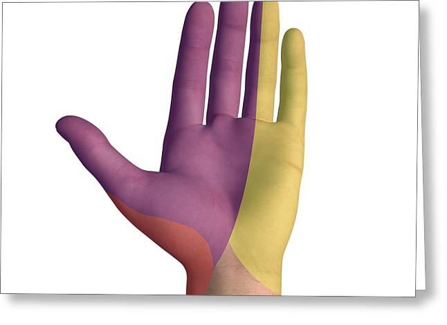 Hand Palmar Nerve Regions, Artwork Greeting Card by D & L Graphics
