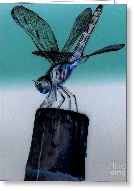 Eunice Miller Greeting Cards - Hand Stand Greeting Card by Eunice Miller