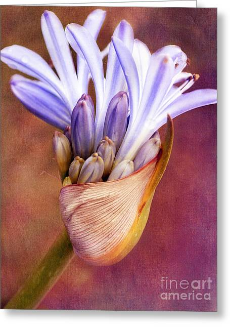 Agapanthus Greeting Cards - Handful of Joy Greeting Card by Irina Wardas