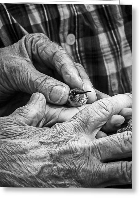 Hands Holding A Hummingbird Greeting Card by Jon Woodhams