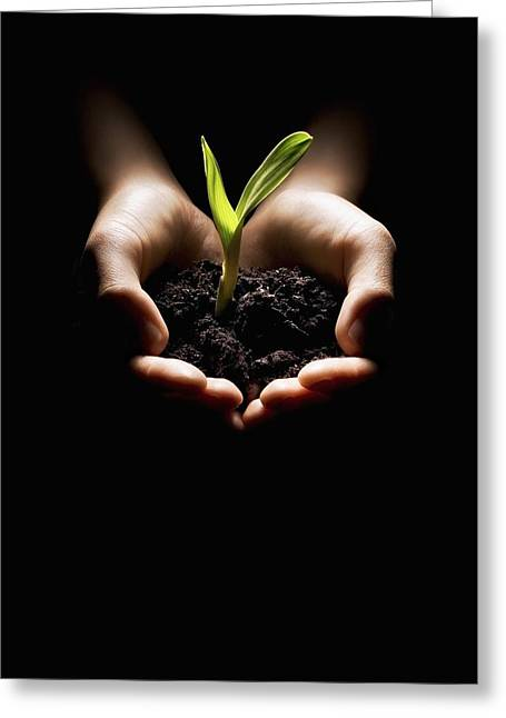 Visual Metaphor Greeting Cards - Hands Holding A Seedling Greeting Card by Chris and Kate Knorr