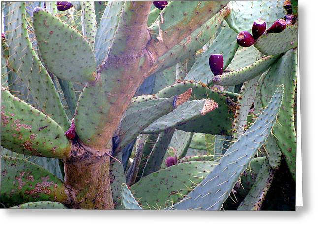 Thorny Desert Plant Greeting Cards - Hands Off Greeting Card by Selma Glunn