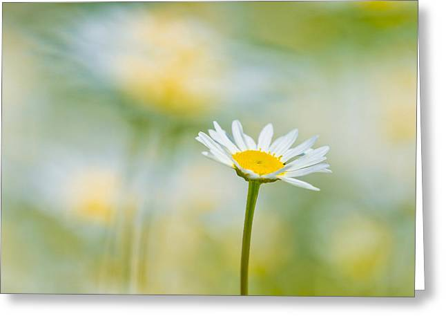 Lots Of Daisies Greeting Cards - Hands Up Daisies Hands Up Greeting Card by Steven Poulton