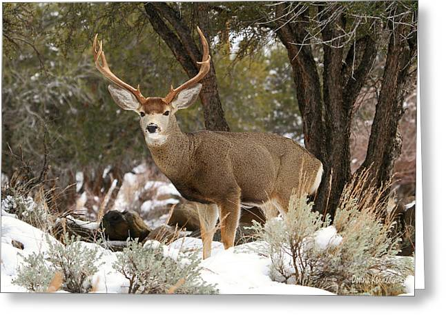 Canon 7d Greeting Cards - Handsome Buck Greeting Card by Donna Kennedy