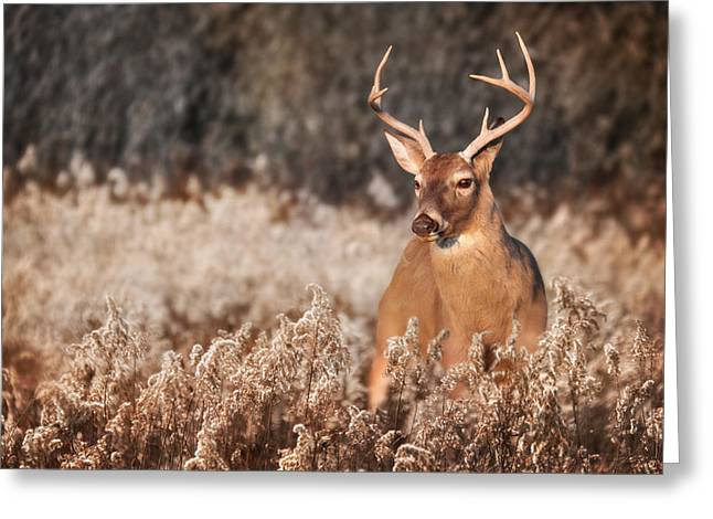 Rack Greeting Cards - Handsome Buck Greeting Card by Lori Deiter