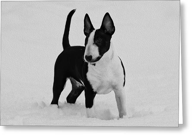 British Portraits Greeting Cards - Handsome Bull Terrier Puppy in Black and White Greeting Card by Lisa Hufnagel