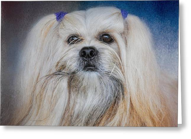 Artistic Photography Greeting Cards - Handsome Lhasa Apso Greeting Card by Jai Johnson