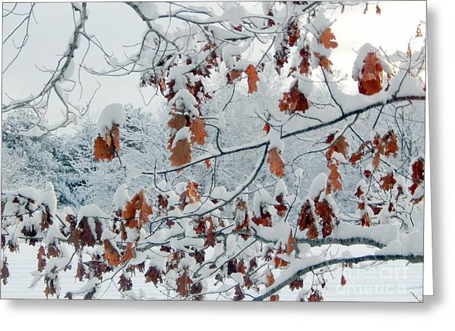 Annapolis Valley Greeting Cards - Hang In There Greeting Card by Karen Cook