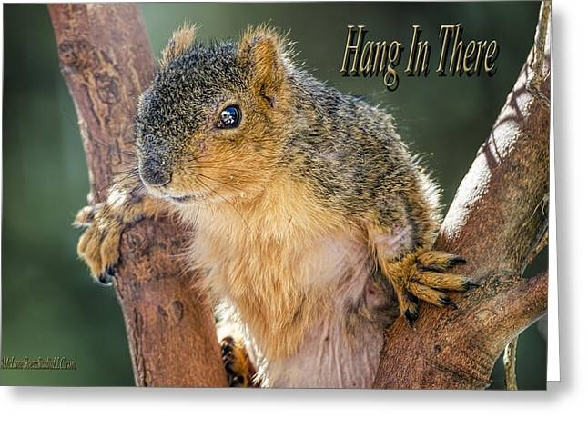 Wild Orchards Greeting Cards - Hang in there Greeting Card by LeeAnn McLaneGoetz McLaneGoetzStudioLLCcom
