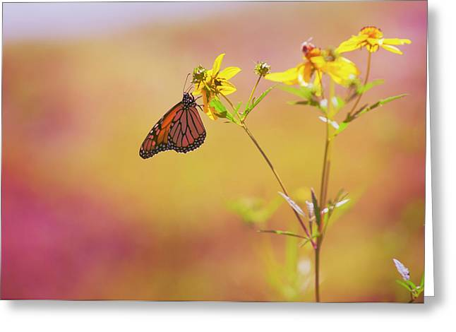 Monarch Greeting Cards - Hang Greeting Card by Joel Olives