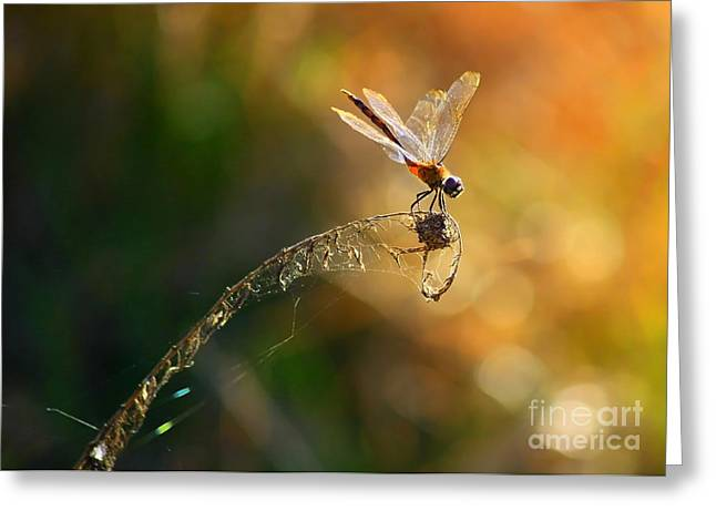 Flying Spider Greeting Cards - Hang On Greeting Card by Carol Groenen