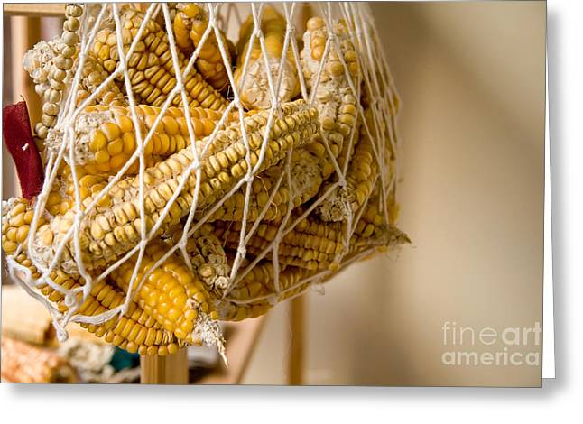 Corn Maze Greeting Cards - Hanged Dry Organic Corns In A Net Greeting Card by Leyla Ismet