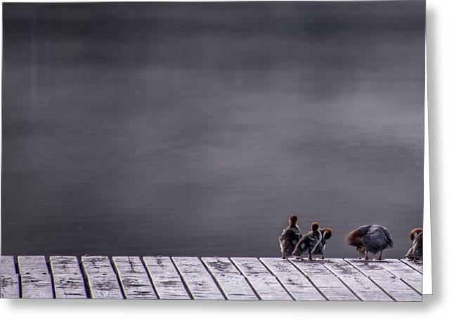 Duck Pond Greeting Cards - Hangin Out Greeting Card by Aaron S Bedell