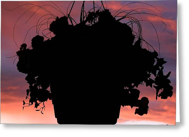 Hanging Baskets Greeting Cards - Hanging Basket Silhouette Greeting Card by Will Borden