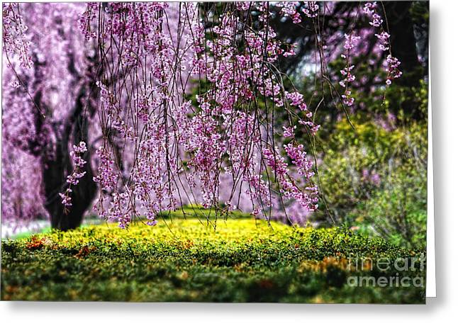 Pink Flower Branch Greeting Cards - Hanging Blooms Greeting Card by Nishanth Gopinathan