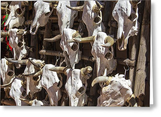 Steer Photographs Greeting Cards - Hanging Cow Skulls Greeting Card by Garry Gay