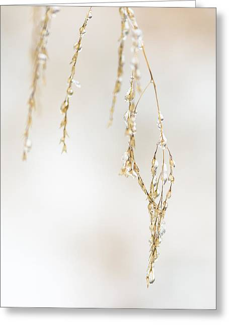 Tone On Tone Greeting Cards - Hanging Frozen Grass Virtical Greeting Card by David Waldo
