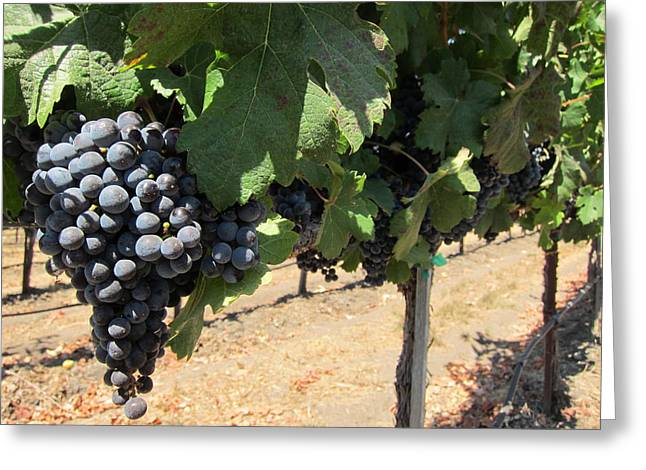 Cakebread Greeting Cards - Hanging Grapes Greeting Card by Amanda Schleicher