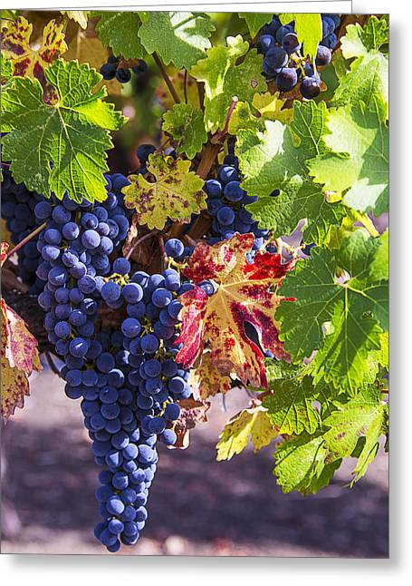 Grapevine Photographs Greeting Cards - Hanging Grapes Greeting Card by Garry Gay