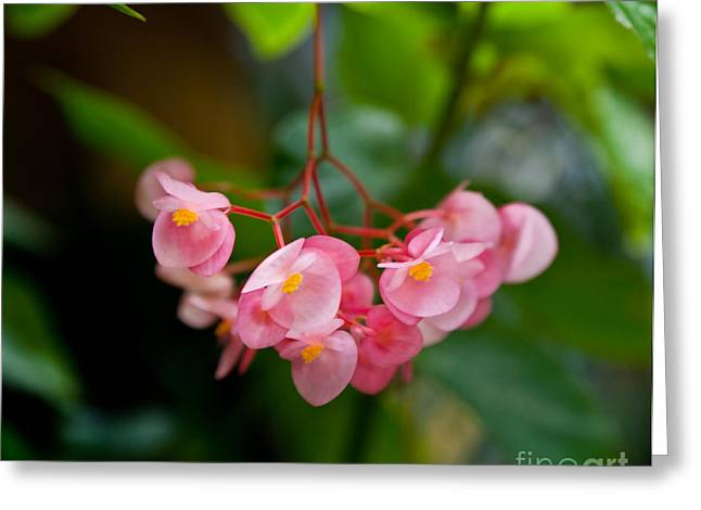 Digital Art Greeting Cards - Hanging in Pink Greeting Card by Michelle Wiarda