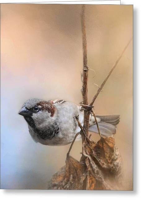 Birds On A Branch Greeting Cards - Hanging On Greeting Card by Jai Johnson