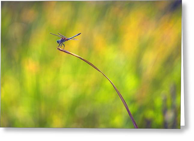 Stream Greeting Cards - Hanging On Greeting Card by Larry Helms