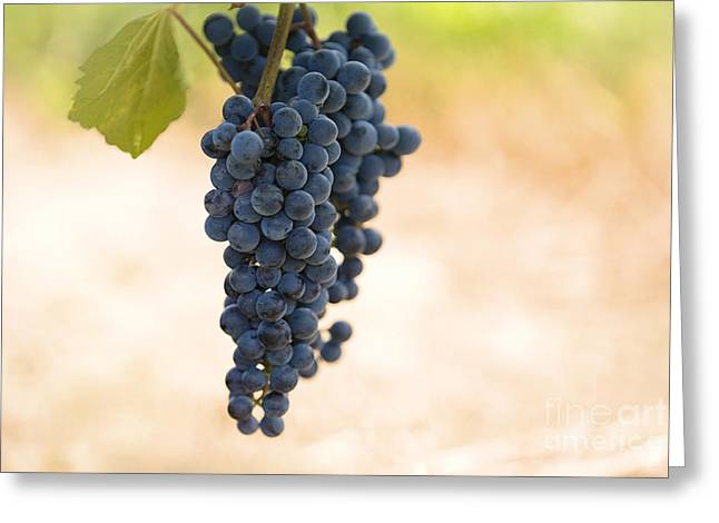 Blue Grapes Photographs Greeting Cards - Hanging on the Vine Greeting Card by Jan Tyler