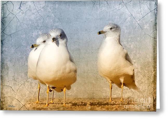 Ring-billed Gull Greeting Cards - Hanging Out  Greeting Card by Betty LaRue