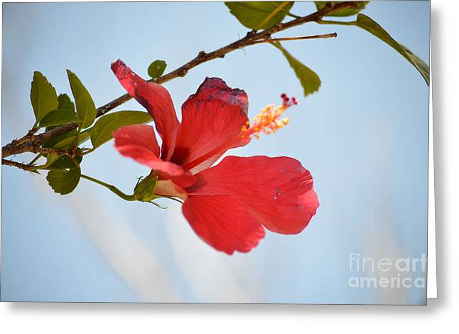 Flowers Against The Sky Greeting Cards - Hanging Out Greeting Card by Pamela Shearer