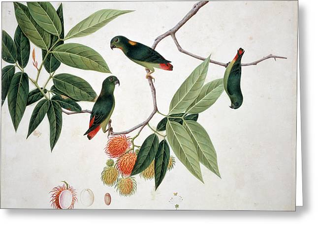 Hanging Parrot Greeting Card by Natural History Museum, London